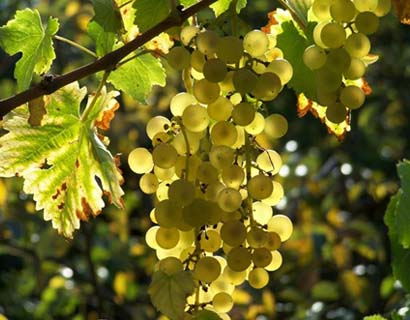 Венгерские винодельческие регионы